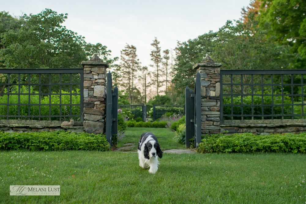 smithosonian garden fairfield editorial photographer commercial photography award winning dog
